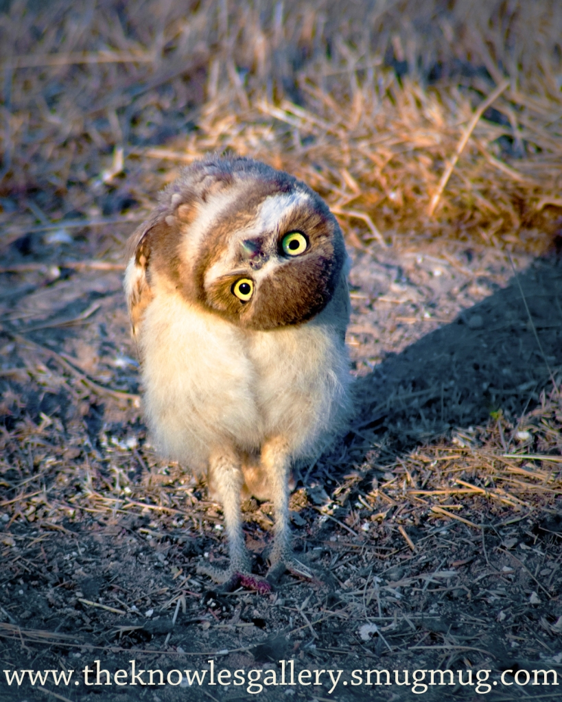 Image result for owl head turn